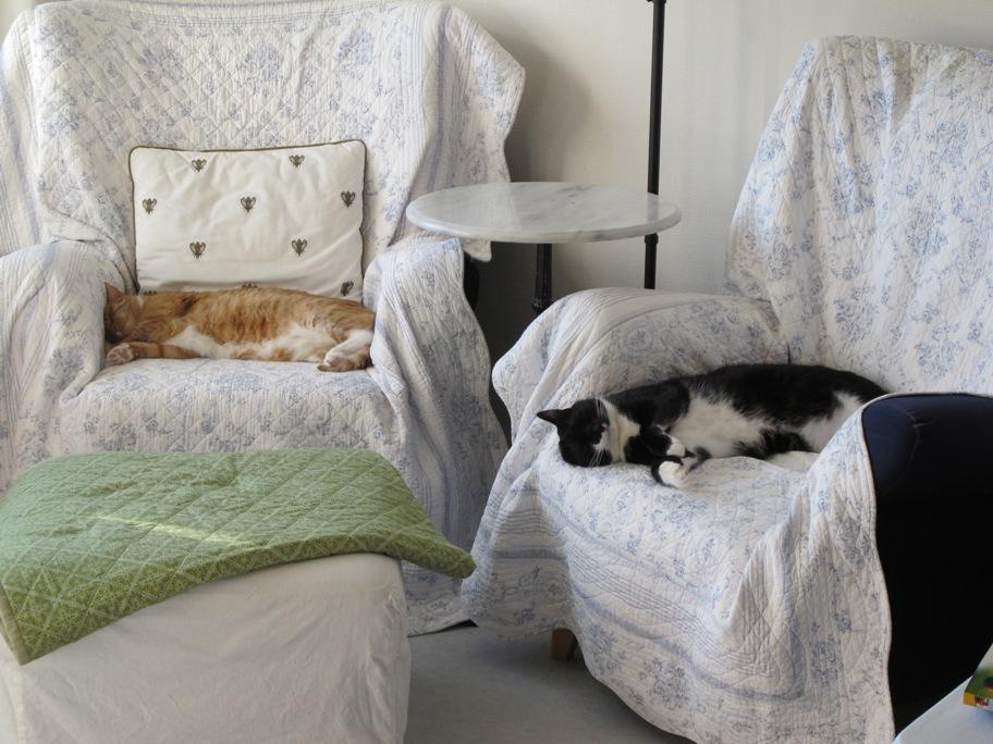 Katzen schlafen auf Sessel