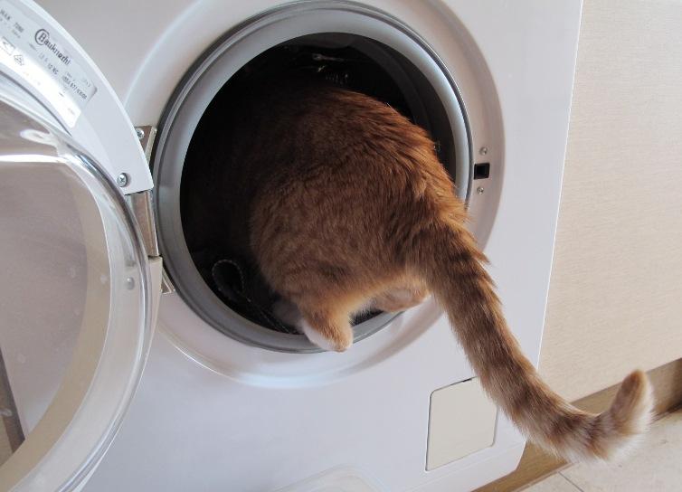 Maxi bei der Wäsche