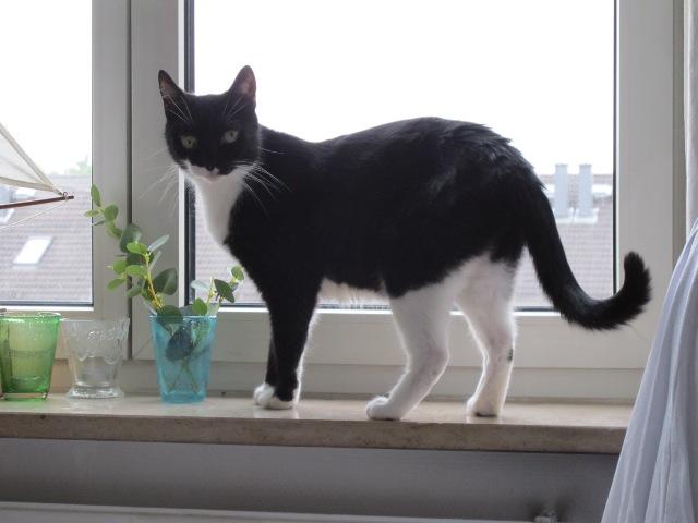 Dicki auf Fensterbrett