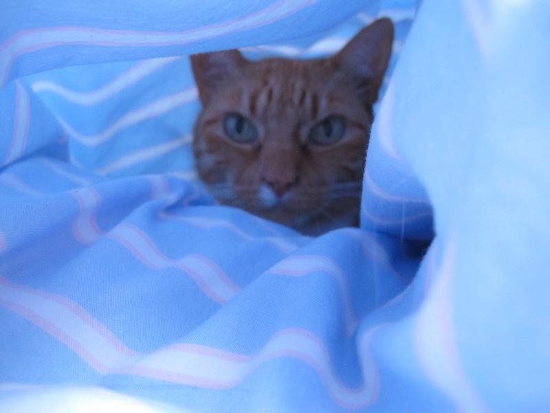 Maxi in der Höhle
