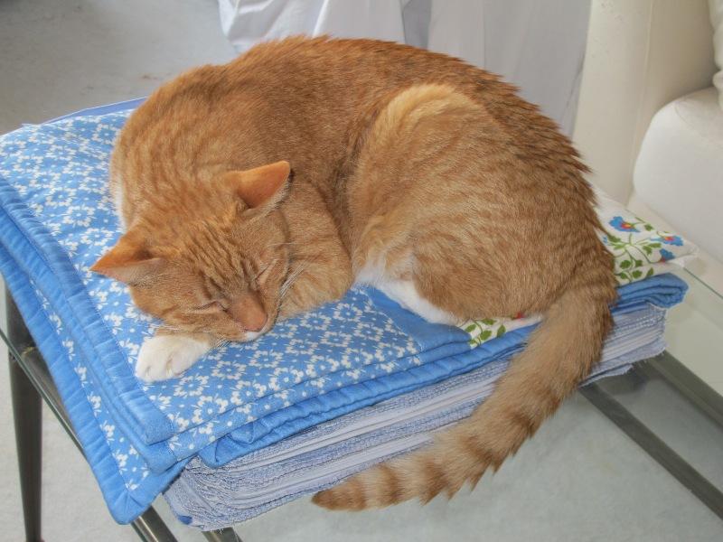 Maxi schläft auf Decke