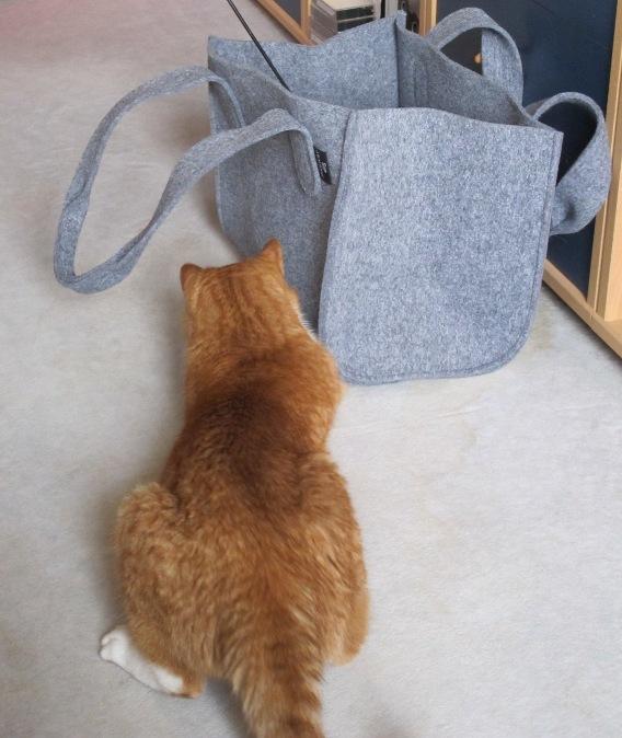 Maxi spielt in der Tasche