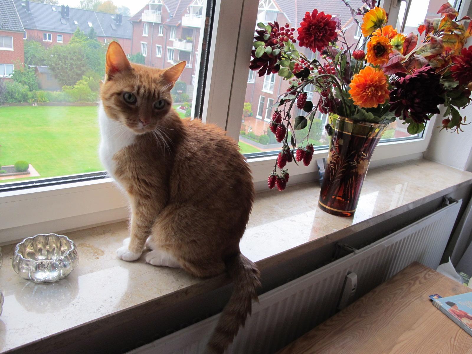 Maxi am Fenster