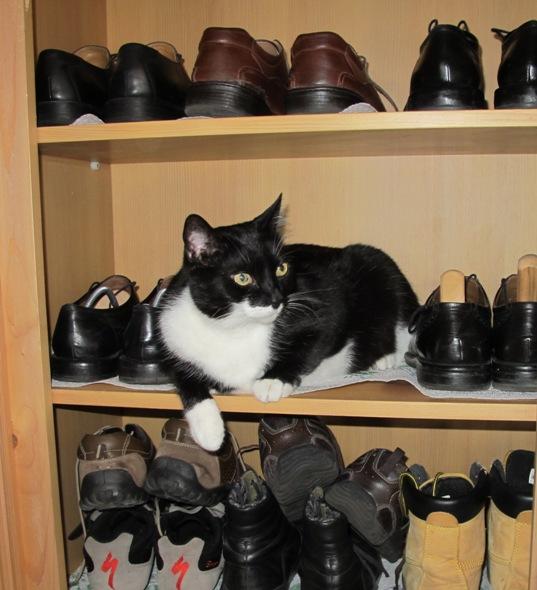 Dicki im Schuhschrank